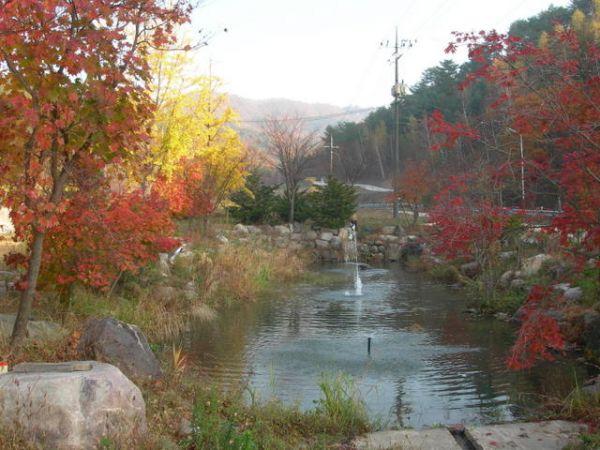 농장앞 연못